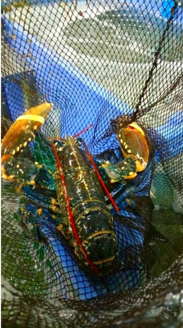 Foto 36 de Venta y distribución de pescados y mariscos del Cantábrico en Gijón | Pescastur