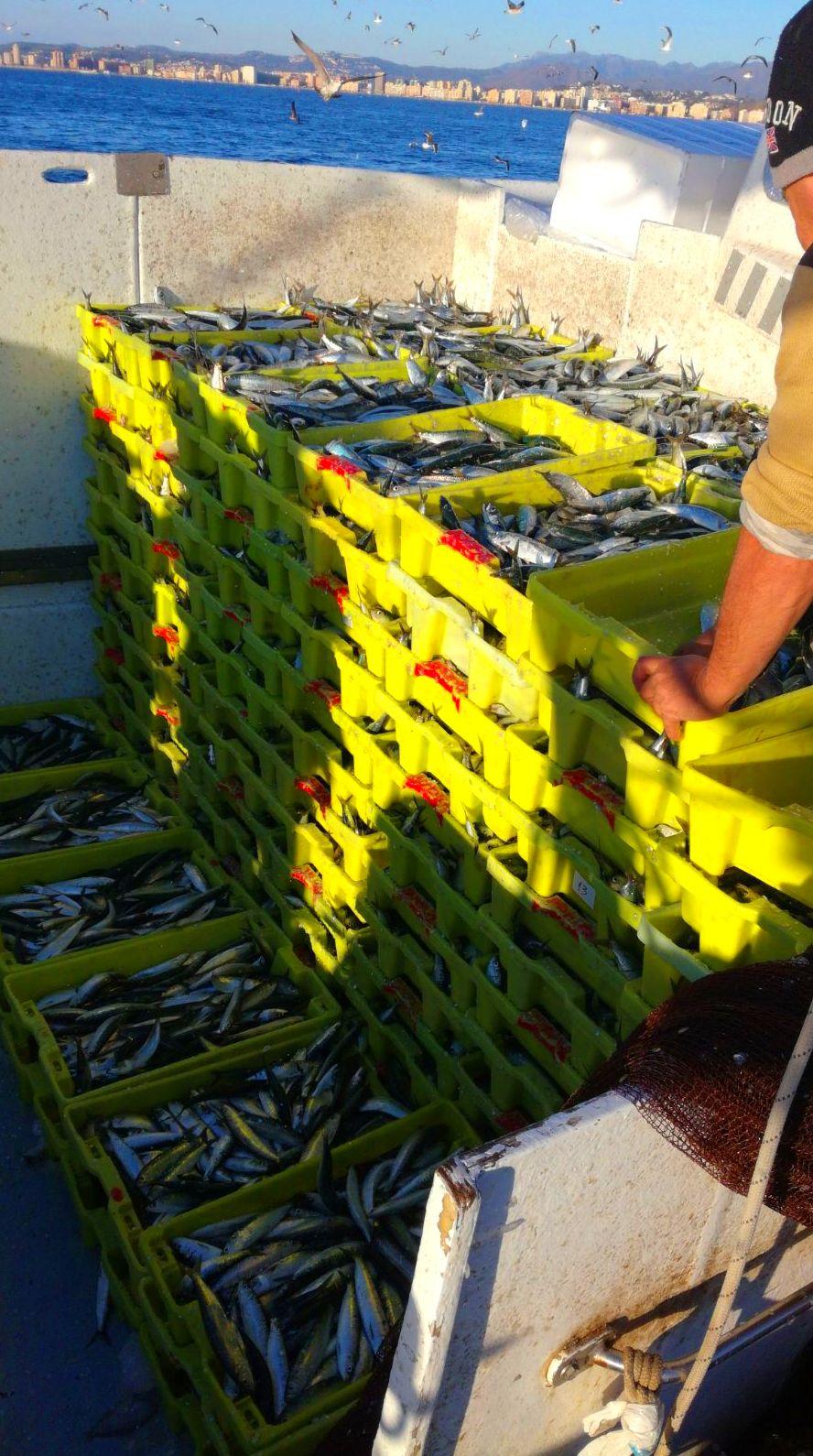 Sardina: SERVICIOS de Pescastur