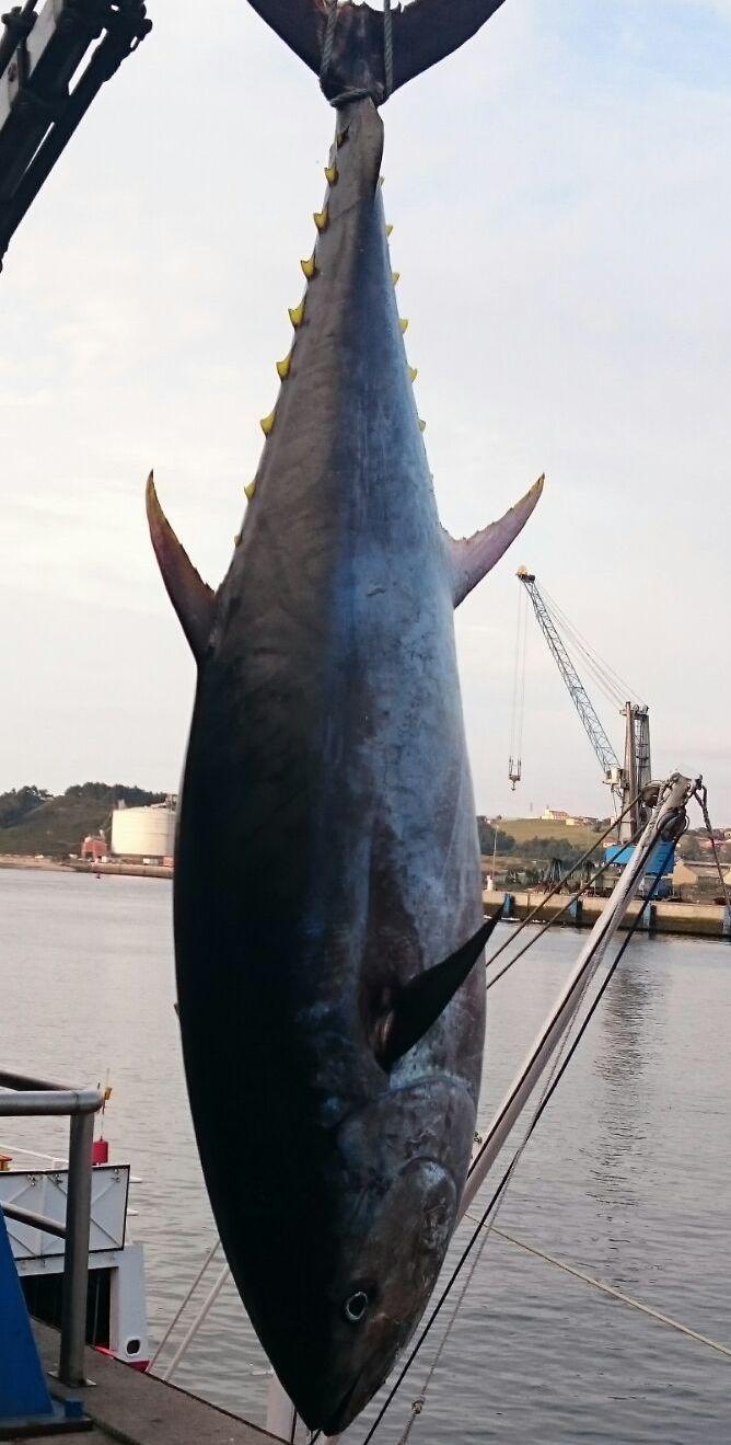 Foto 68 de Venta y distribución de pescados y mariscos del Cantábrico en Gijón | Pescastur