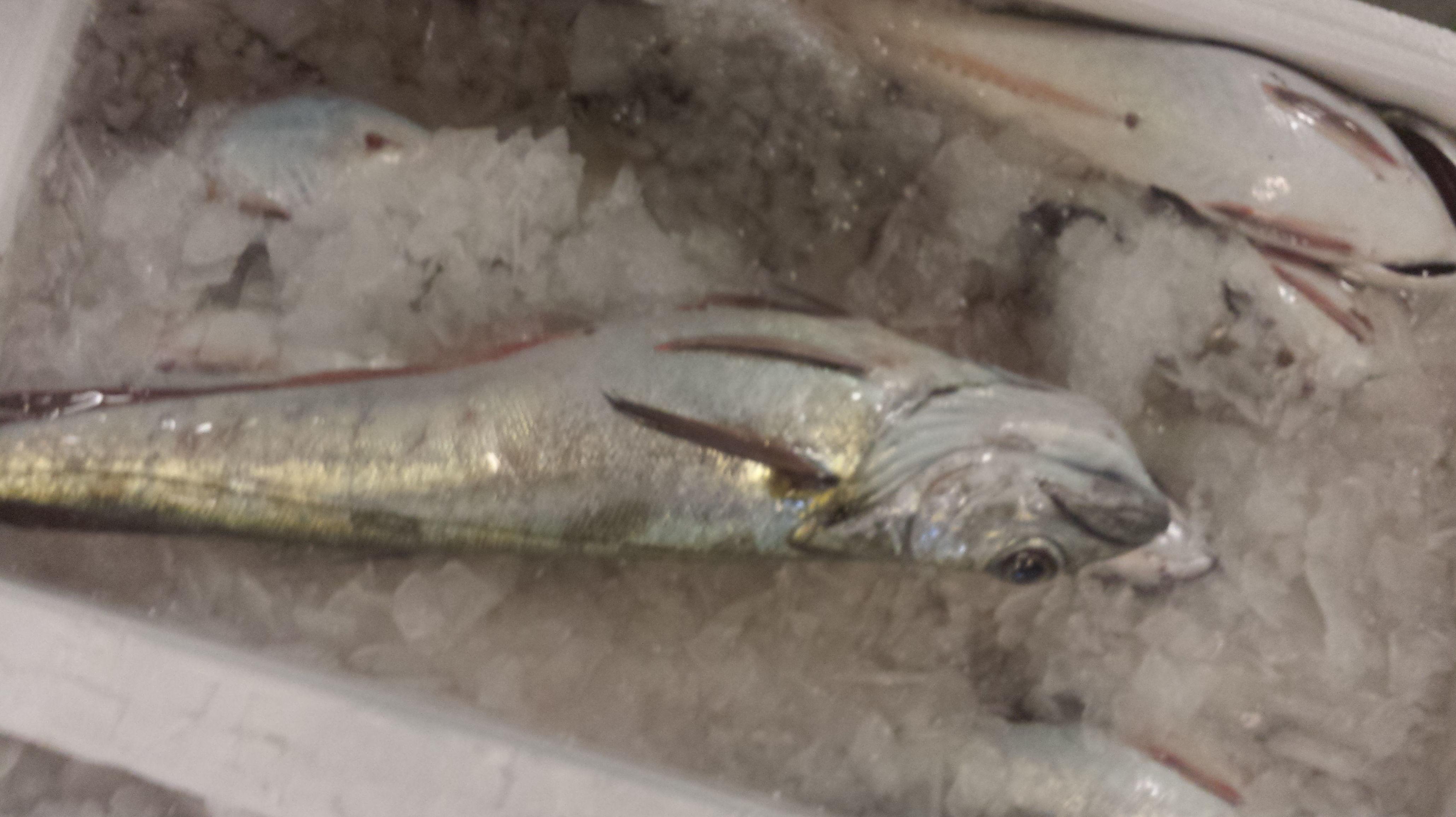 Foto 44 de Venta y distribución de pescados y mariscos del Cantábrico en Gijón   Pescastur