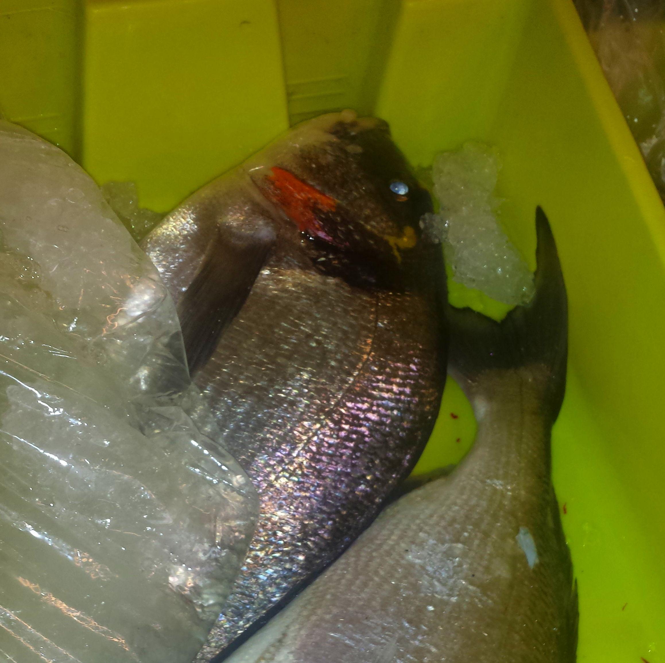 Foto 64 de Venta y distribución de pescados y mariscos del Cantábrico en Gijón | Pescastur