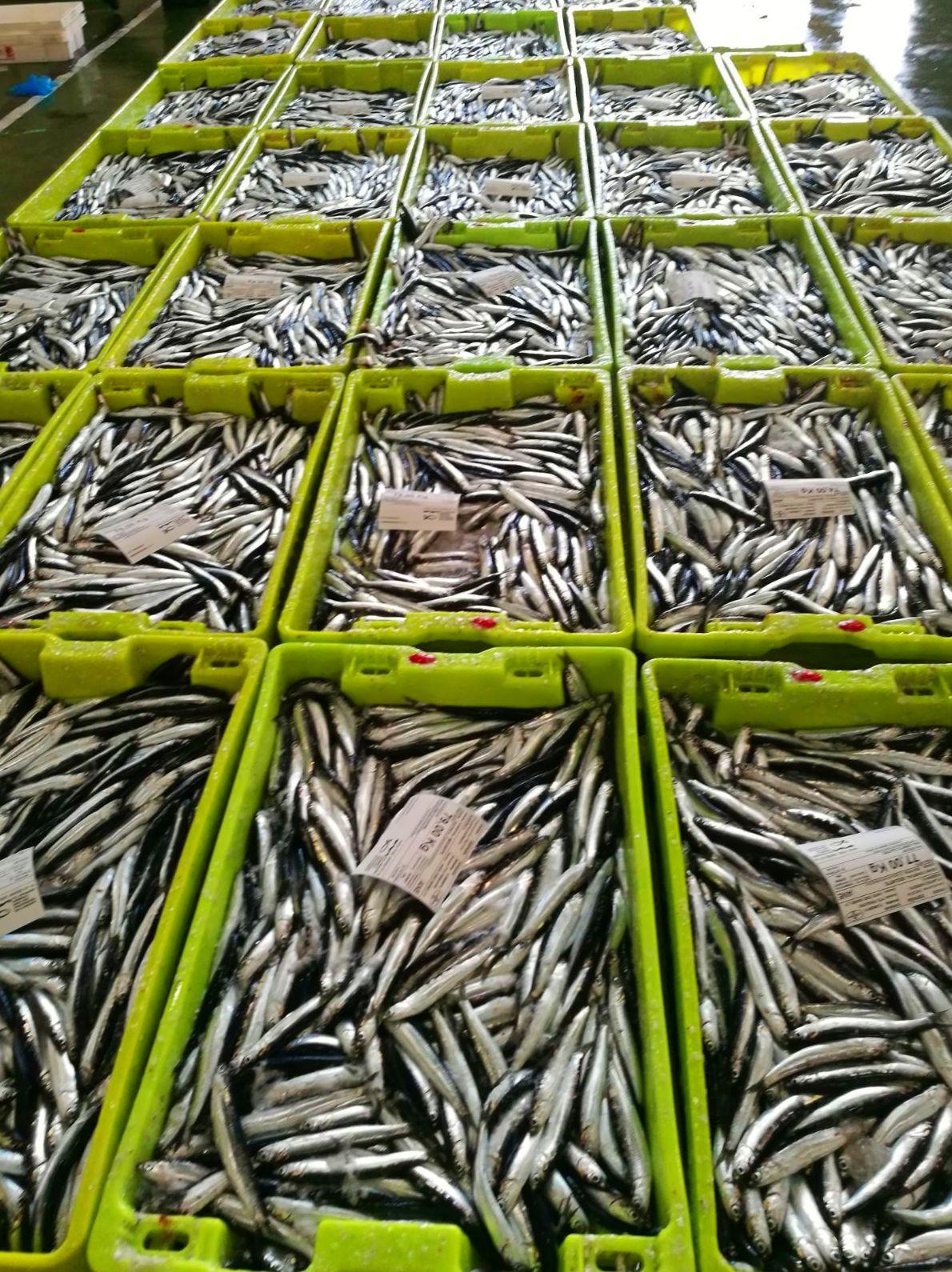 Pescado fresco del cantábrico.