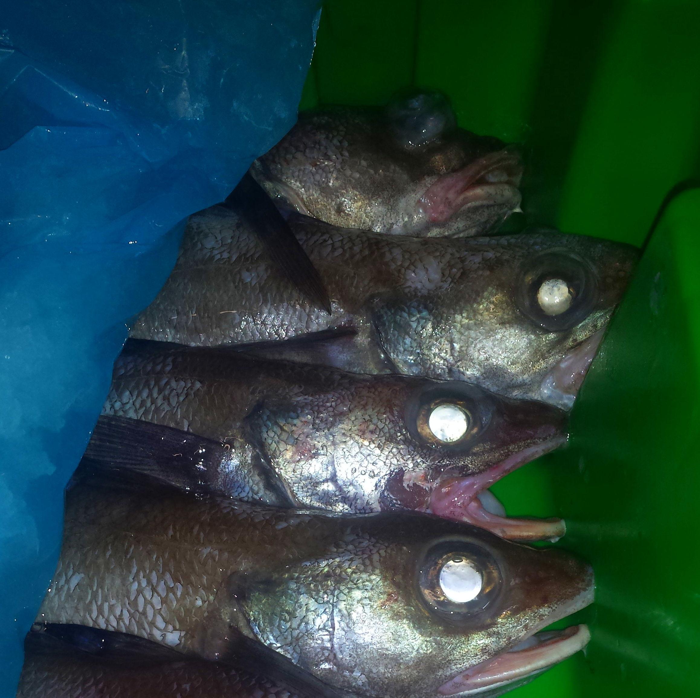 Barbada : SERVICIOS de Pescastur