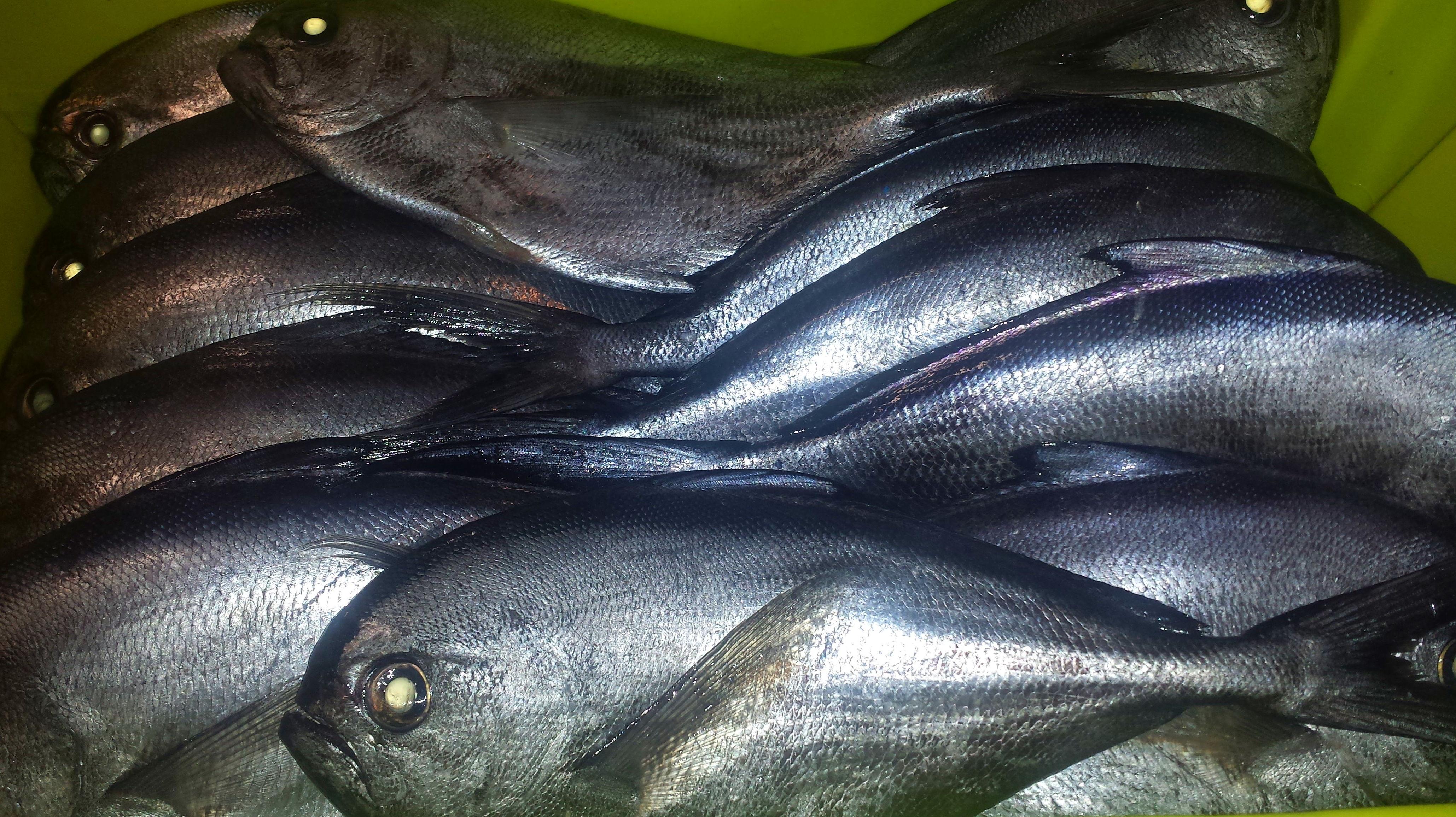 Foto 53 de Venta y distribución de pescados y mariscos del Cantábrico en Gijón | Pescastur