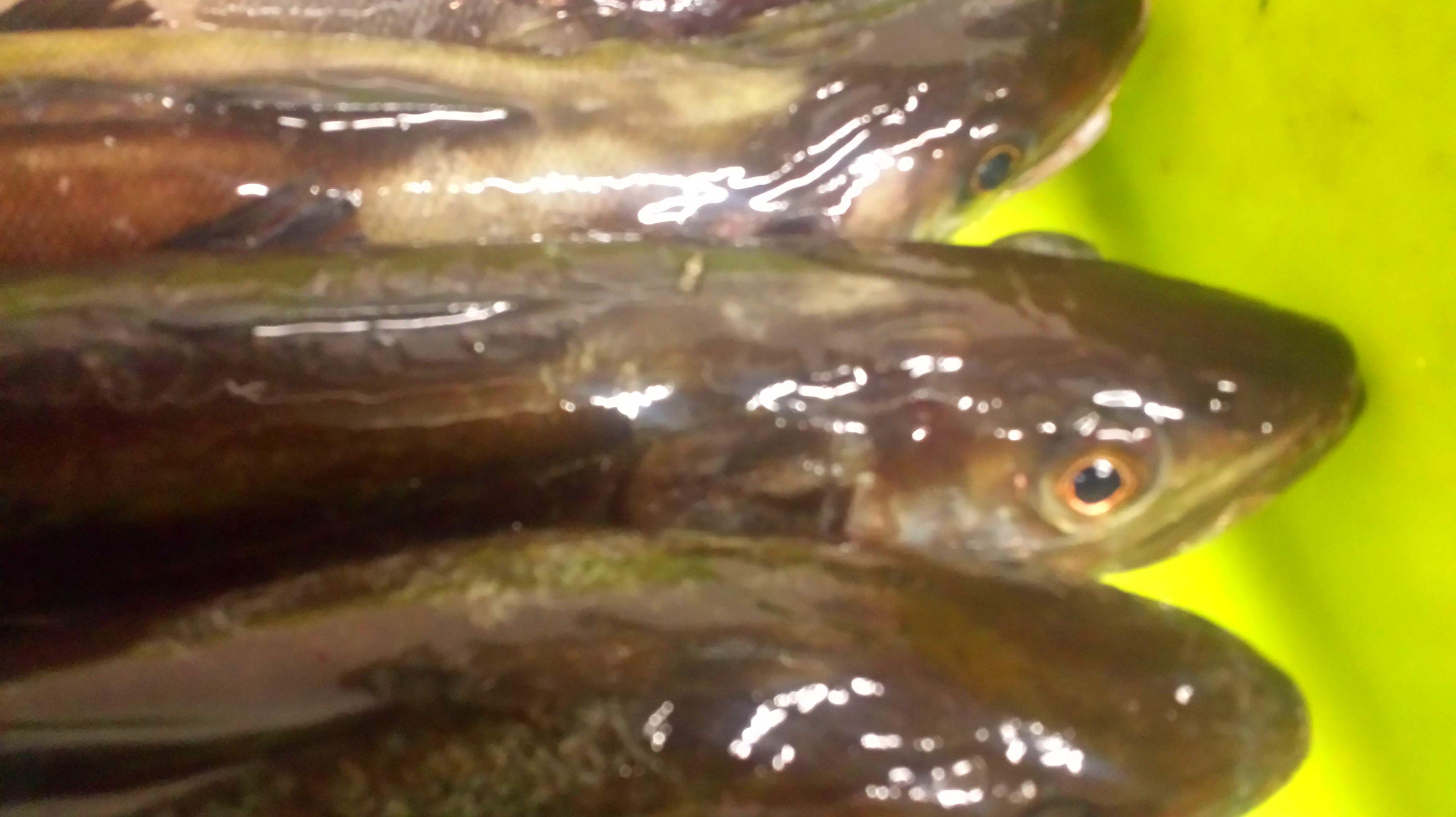 Foto 70 de Venta y distribución de pescados y mariscos del Cantábrico en Gijón | Pescastur