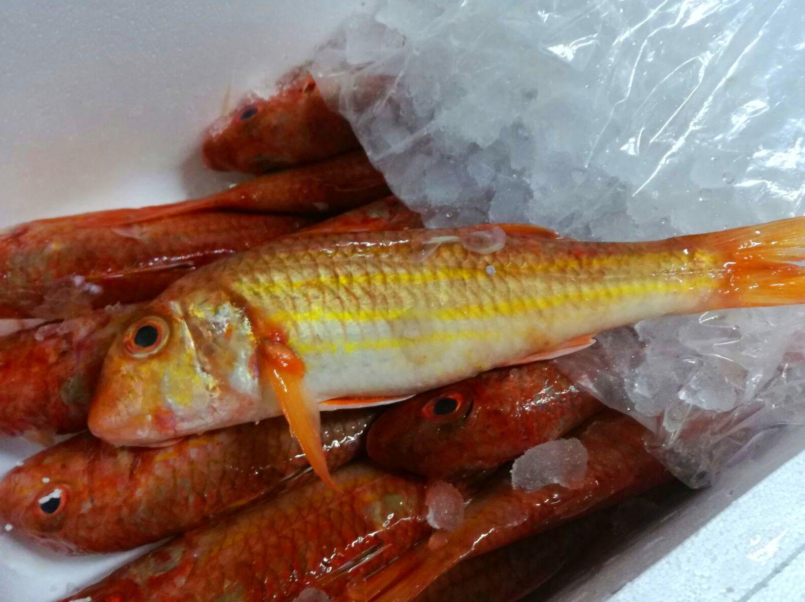 Comprar pescado fresco Gijon