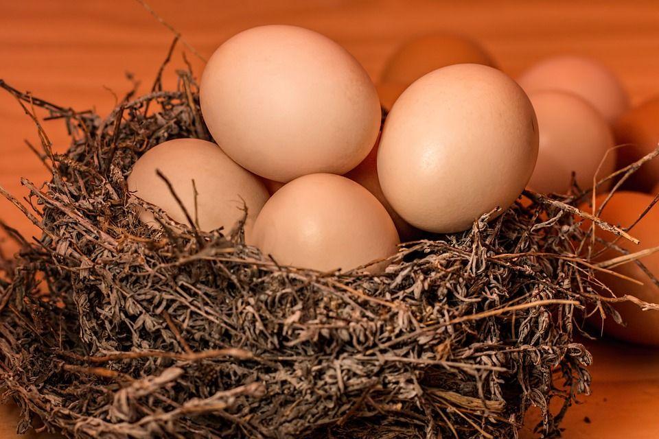 Huevos de corral: Productos y Servicios de Agricultura Sostenible Susana