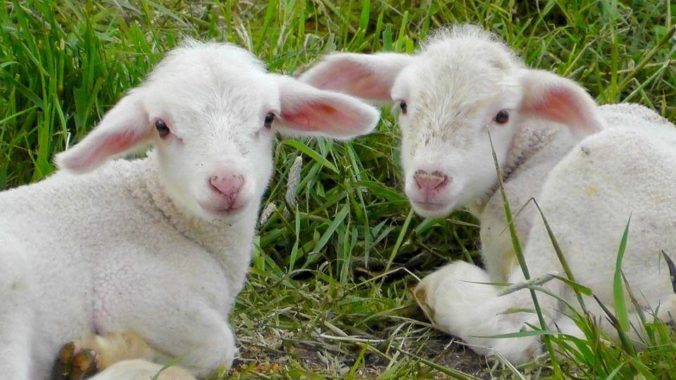 Lechazo: Productos y Servicios de Agricultura Sostenible Susana