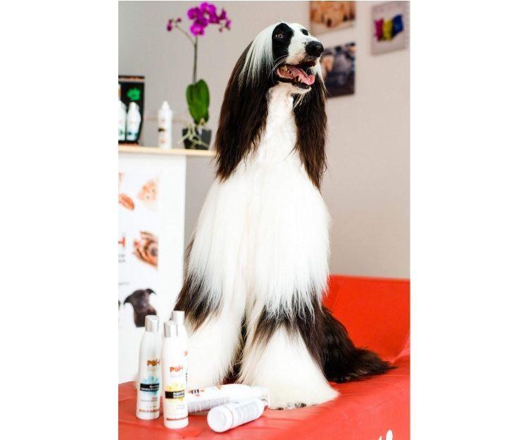 Higiene de mascotas Arona