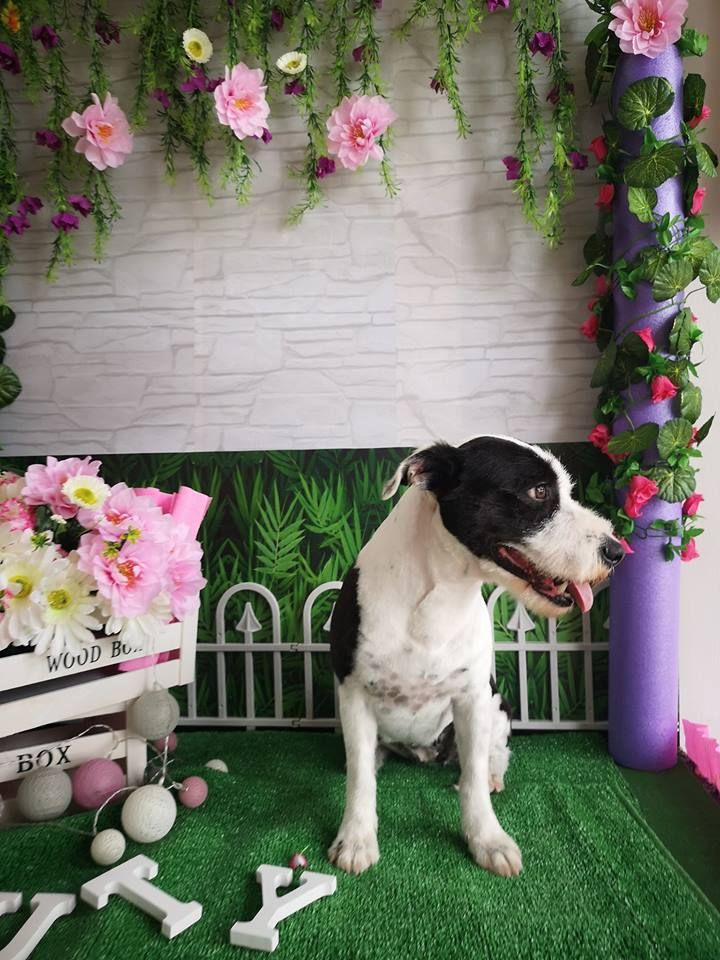 Peluquería canina Arona