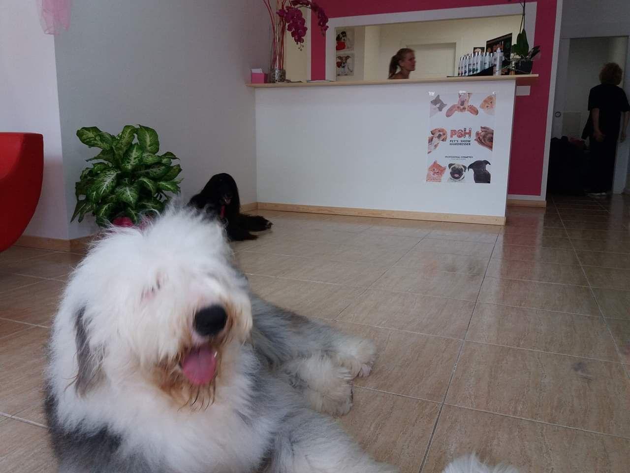Spa para mascotas Arona