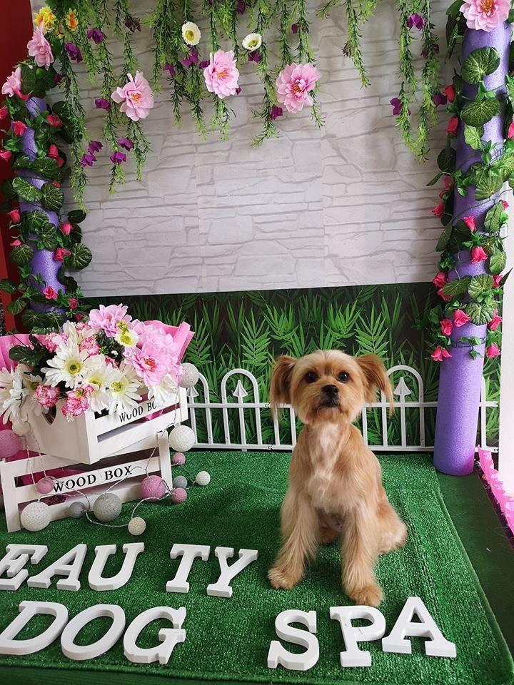Cuidados de belleza para mascotas Arona