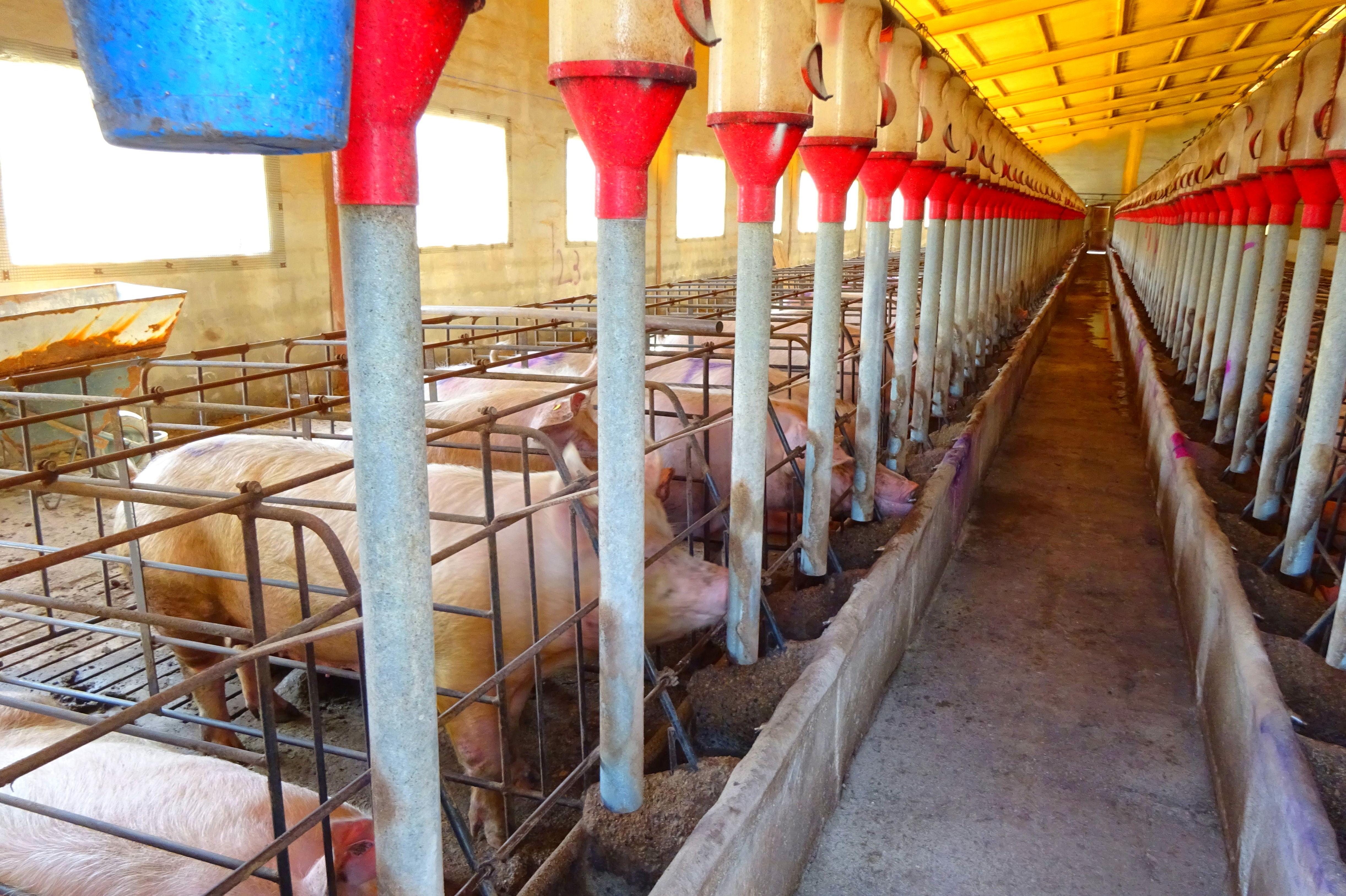 Foto 10 de Desinfección de aguas en Atamaría | SOB Distribuidores