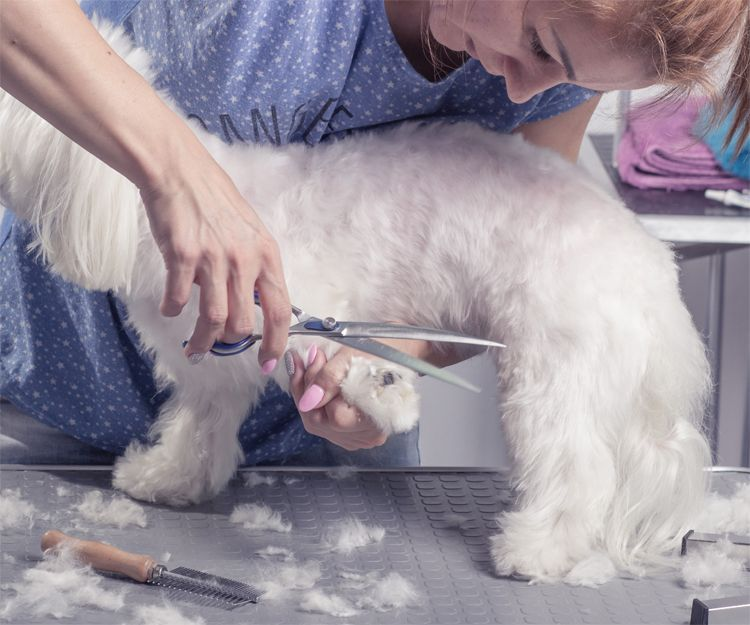 Centro de peluquería canina en Elche