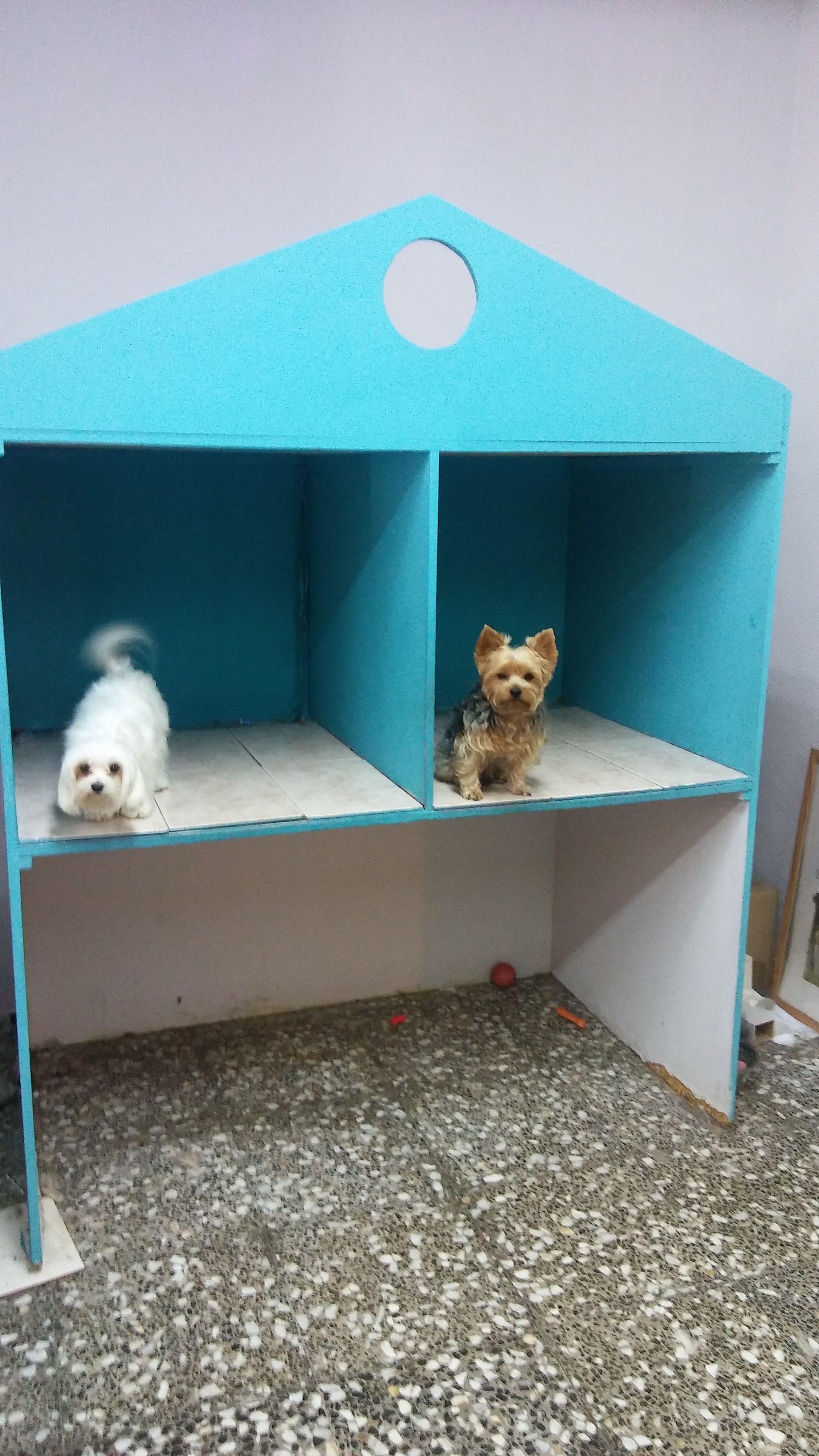Foto 13 de Peluquería canina y felina en Elx | Al Perro Elegante