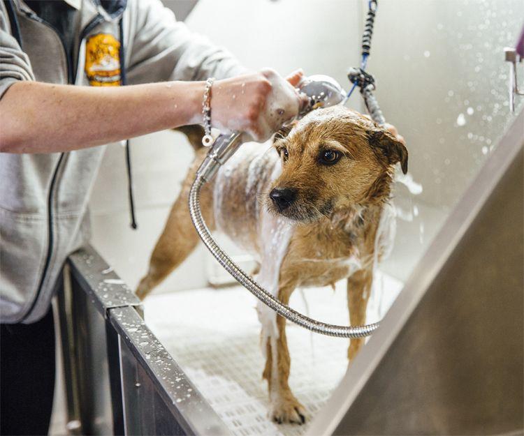 Baño de perros en Elche