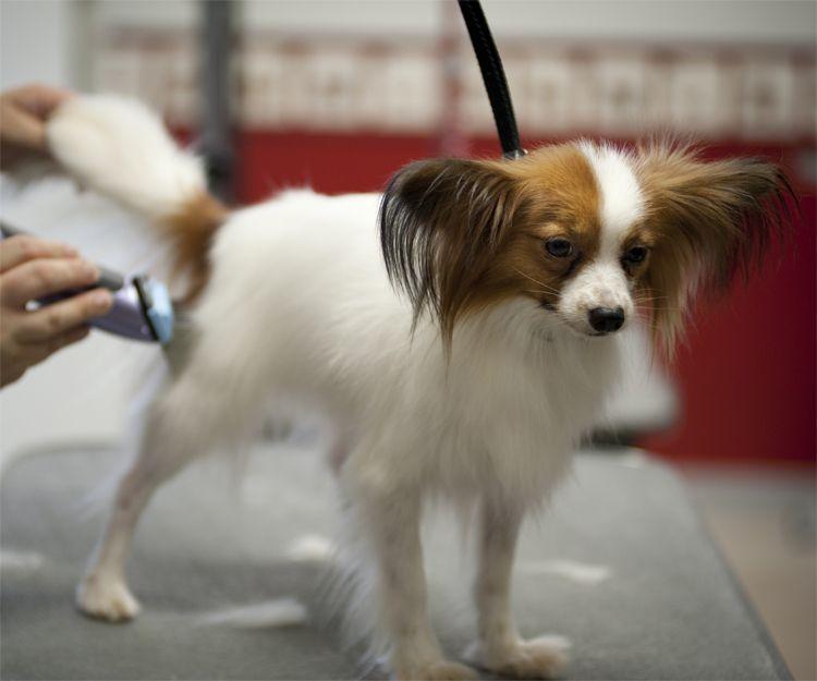 Empresa de peluquería canina en Elche