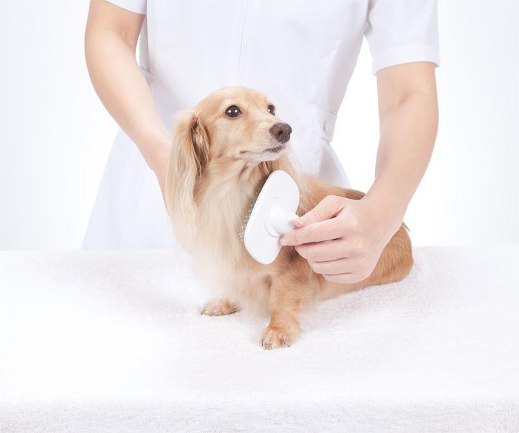 Empresa de peluquería de perros en Elche
