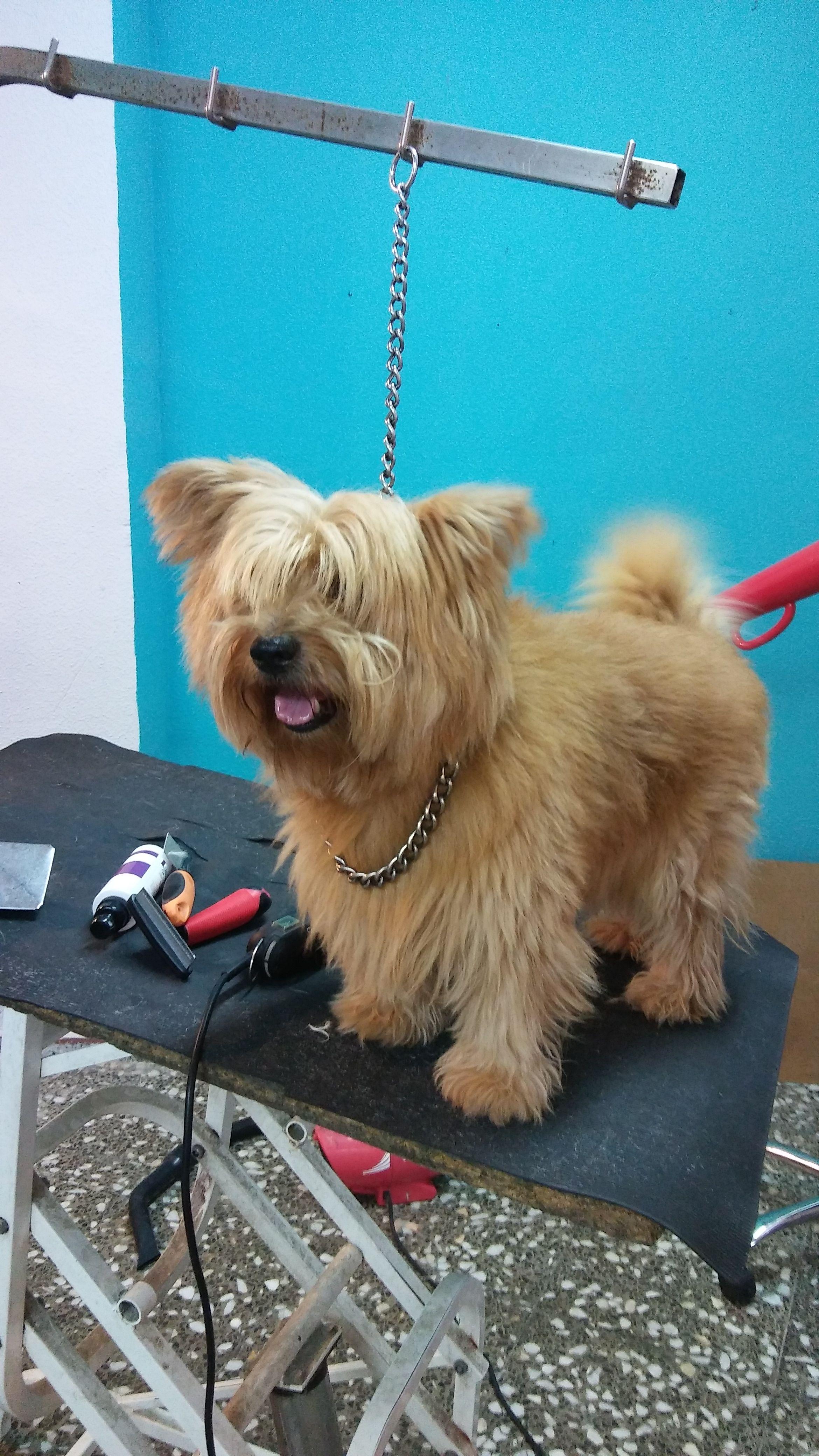 Foto 12 de Peluquería canina y felina en Elx | Al Perro Elegante