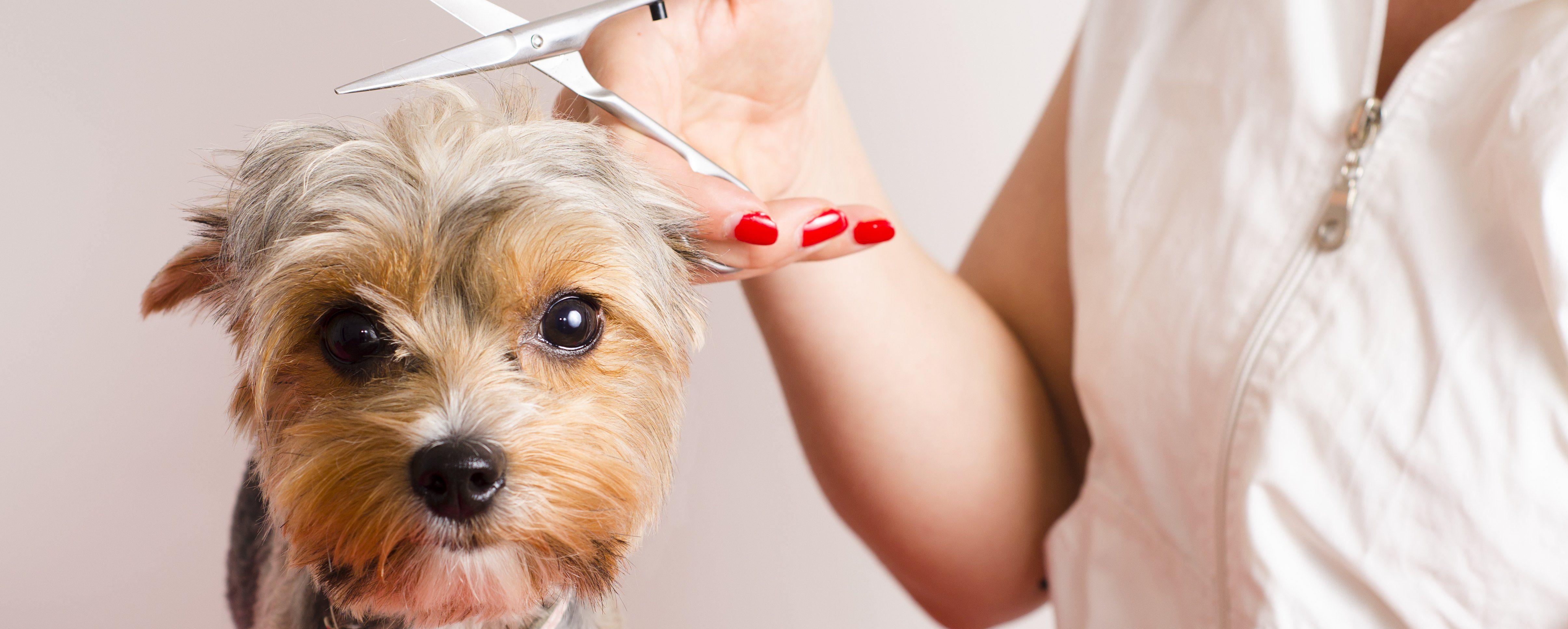 Peluquería Canina: Servicios de Al Perro Elegante