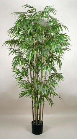 Bambú: CATÁLOGO de Fernando Gallego, S.C.P.