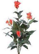 Planta grande con flor: CATÁLOGO de Fernando Gallego, S.C.P.