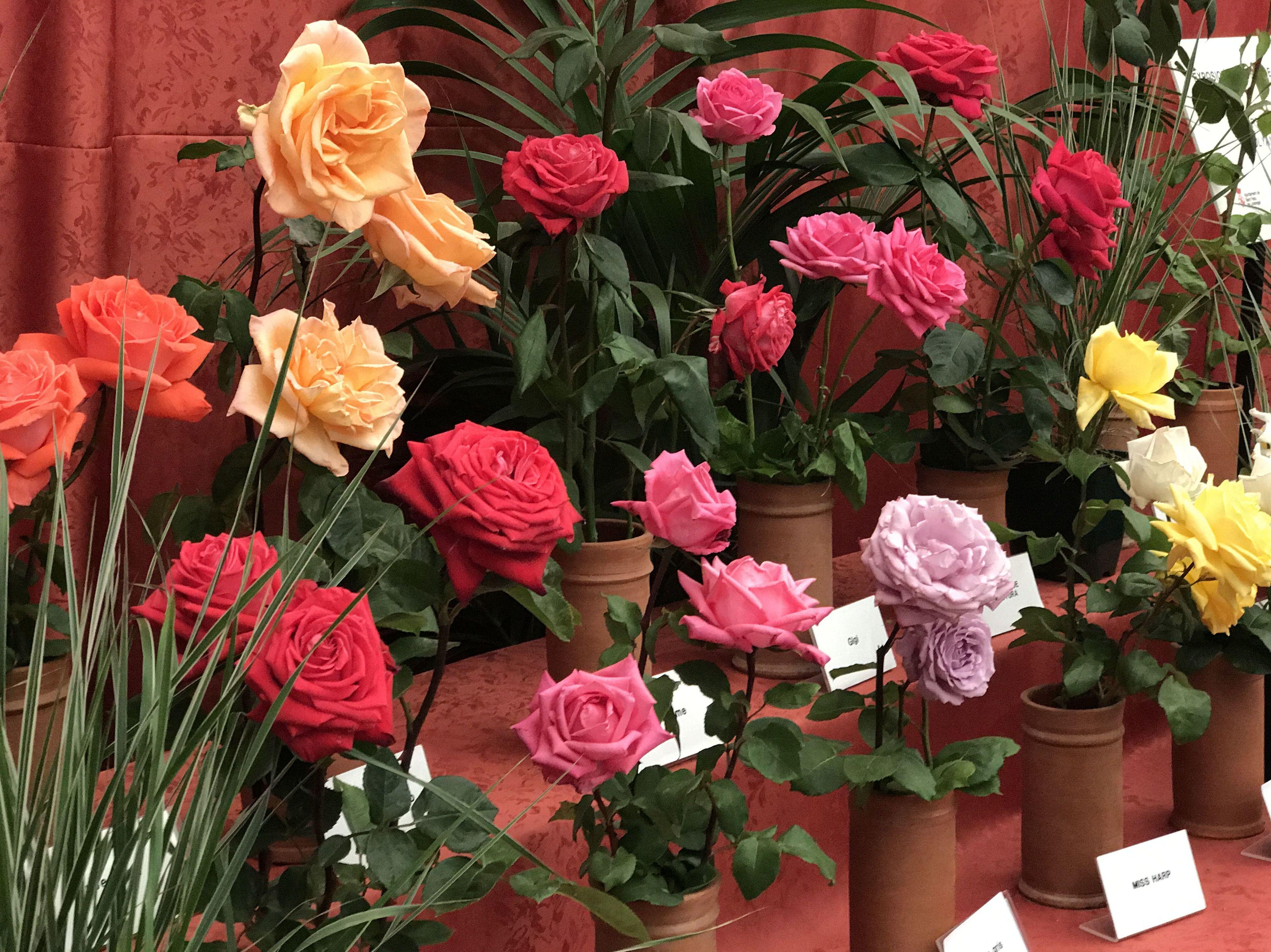 Sant Jordi - el día de la Rosa - Fernando Gallego SCP - Flor y planta artificial