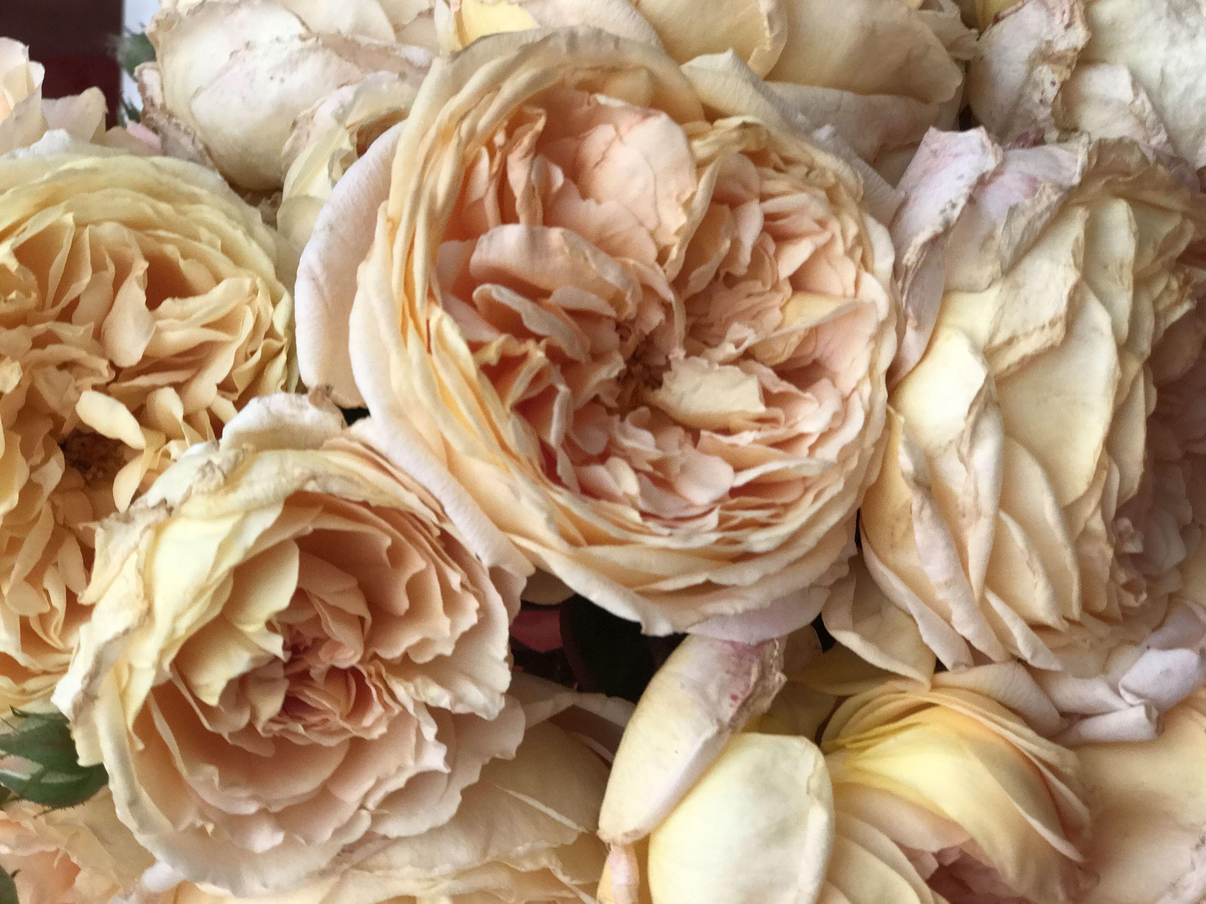 Rosas color crema - Fernando Gallego SCP - Flor y planta artificial