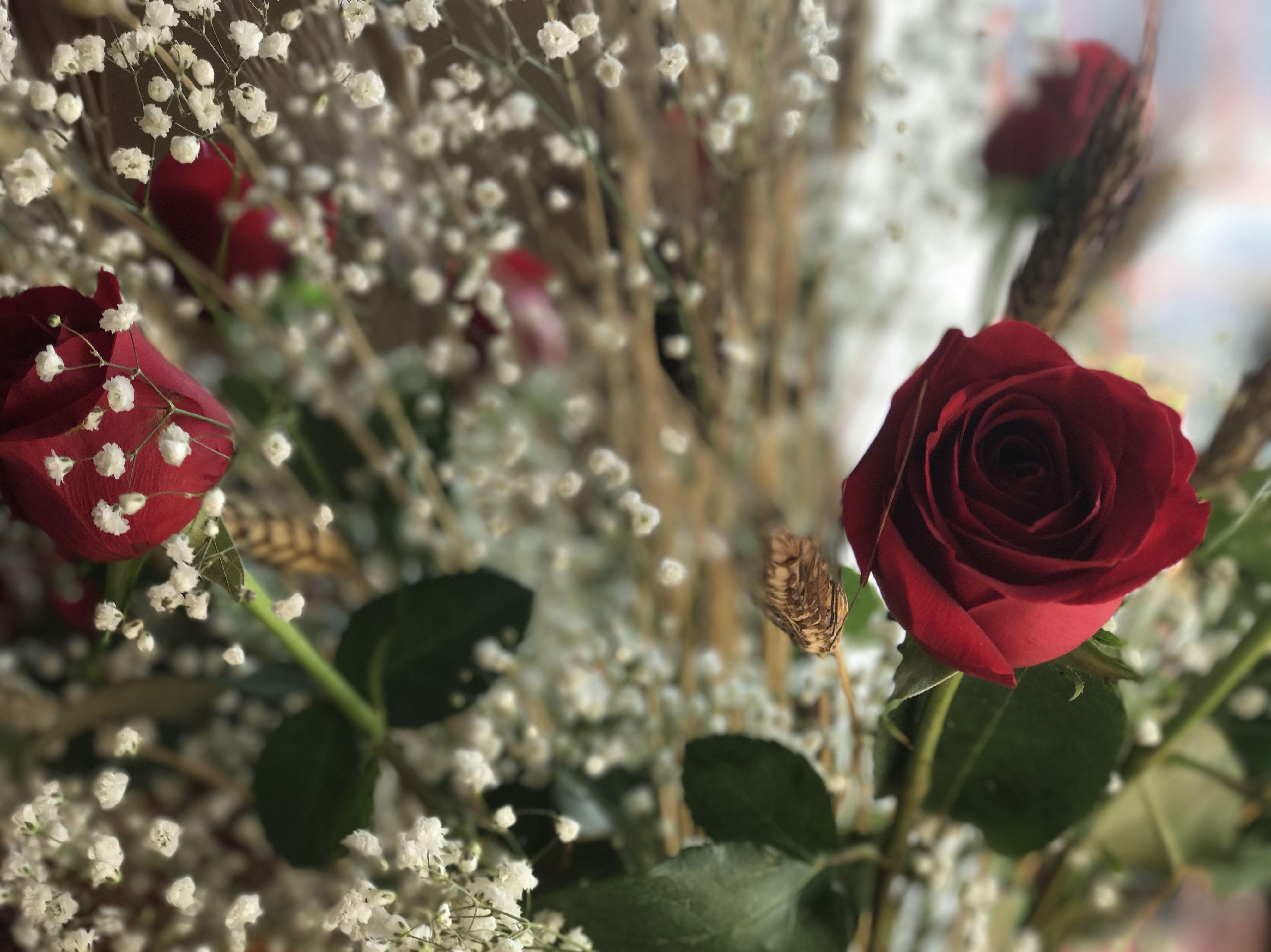 Sant Jordi Rosas con Gipsófila Fernando Gallego SCP - Flor y planta artificial