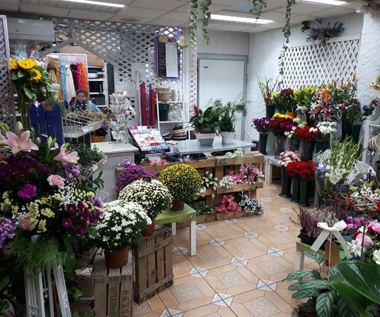 Foto 5 de Floristerías en    Flores Maranta