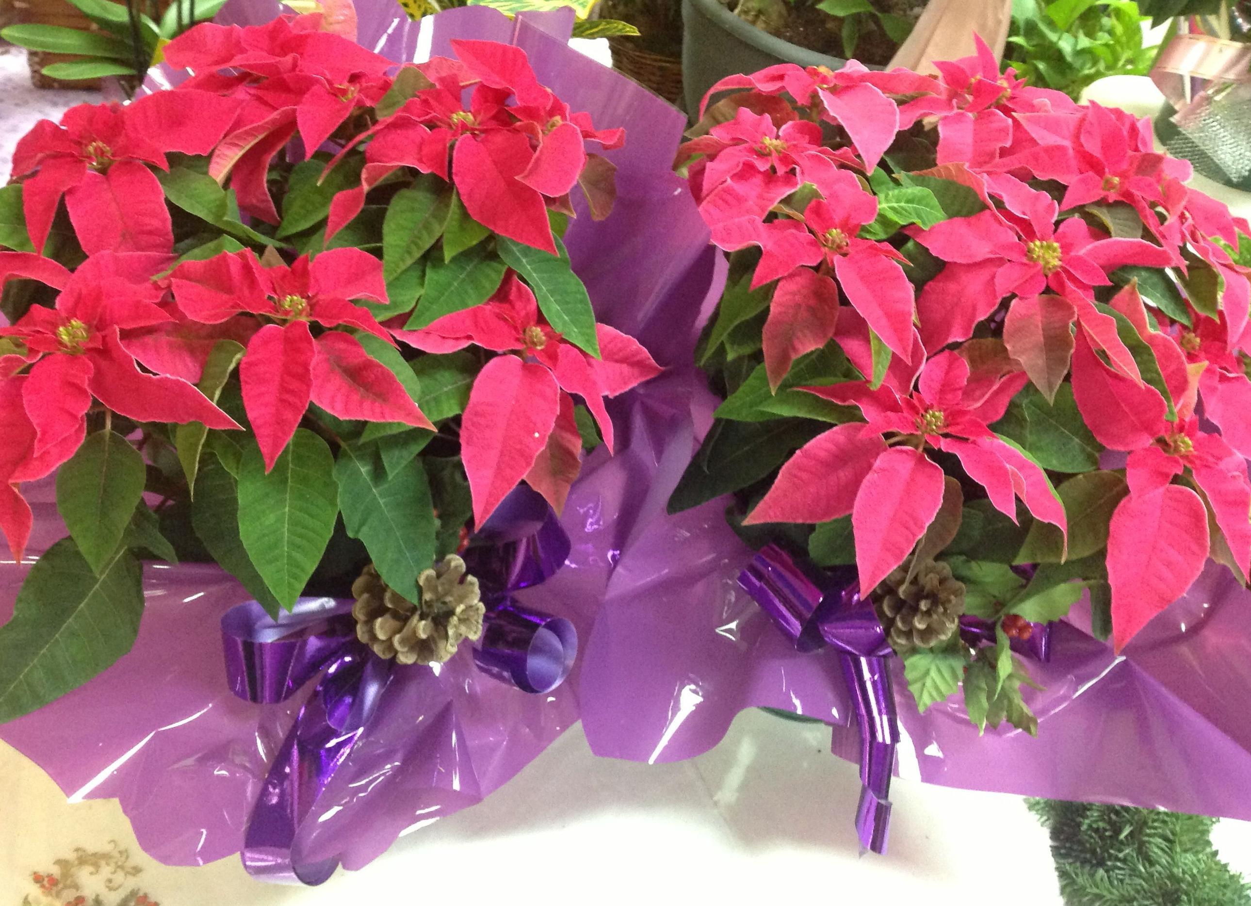 Foto 47 de Floristerías en  | Flores Maranta