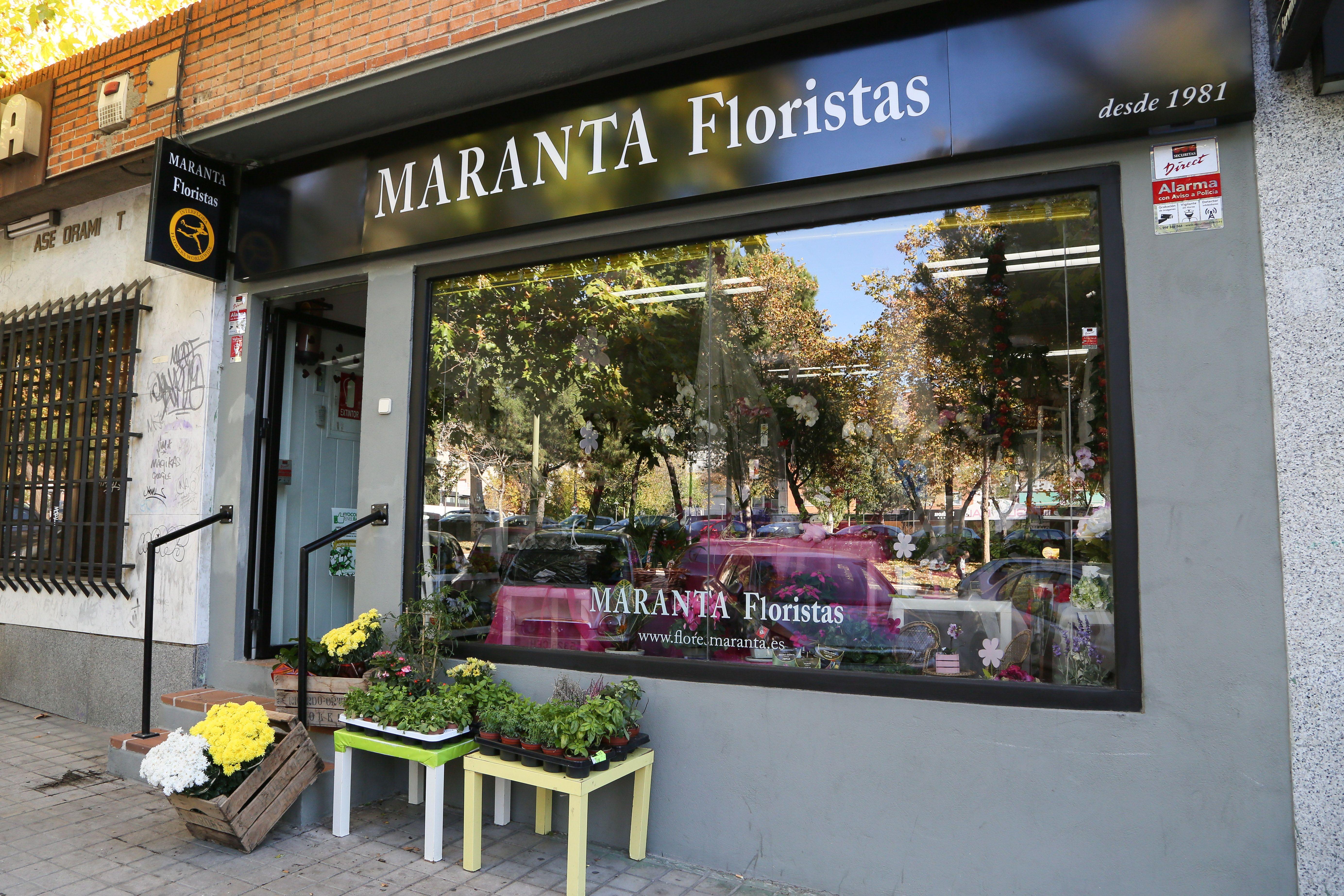 Foto 2 de Floristerías en  | Flores Maranta