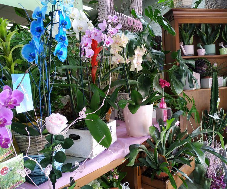 Foto 21 de Floristerías en  | Flores Maranta