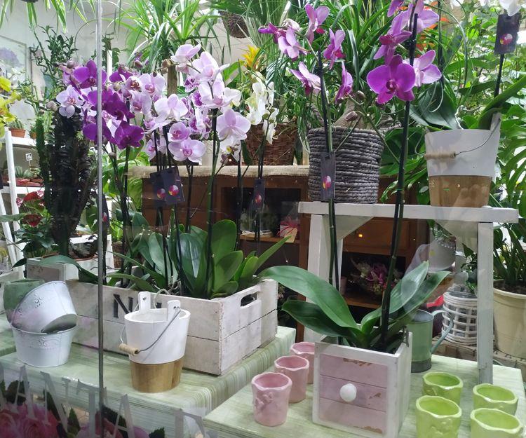 Foto 18 de Floristerías en  | Flores Maranta