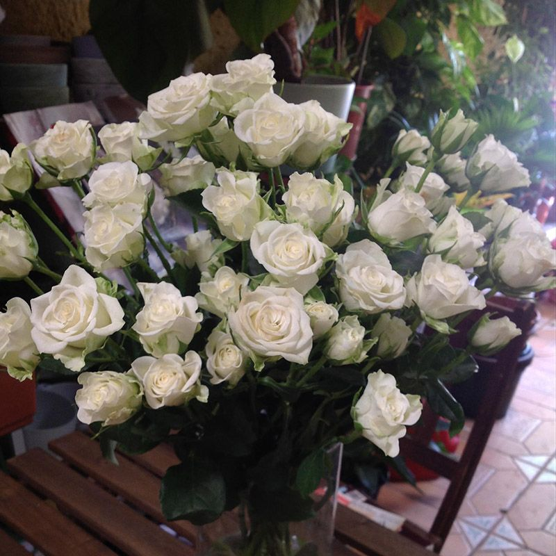 Foto 85 de Floristerías en  | Flores Maranta