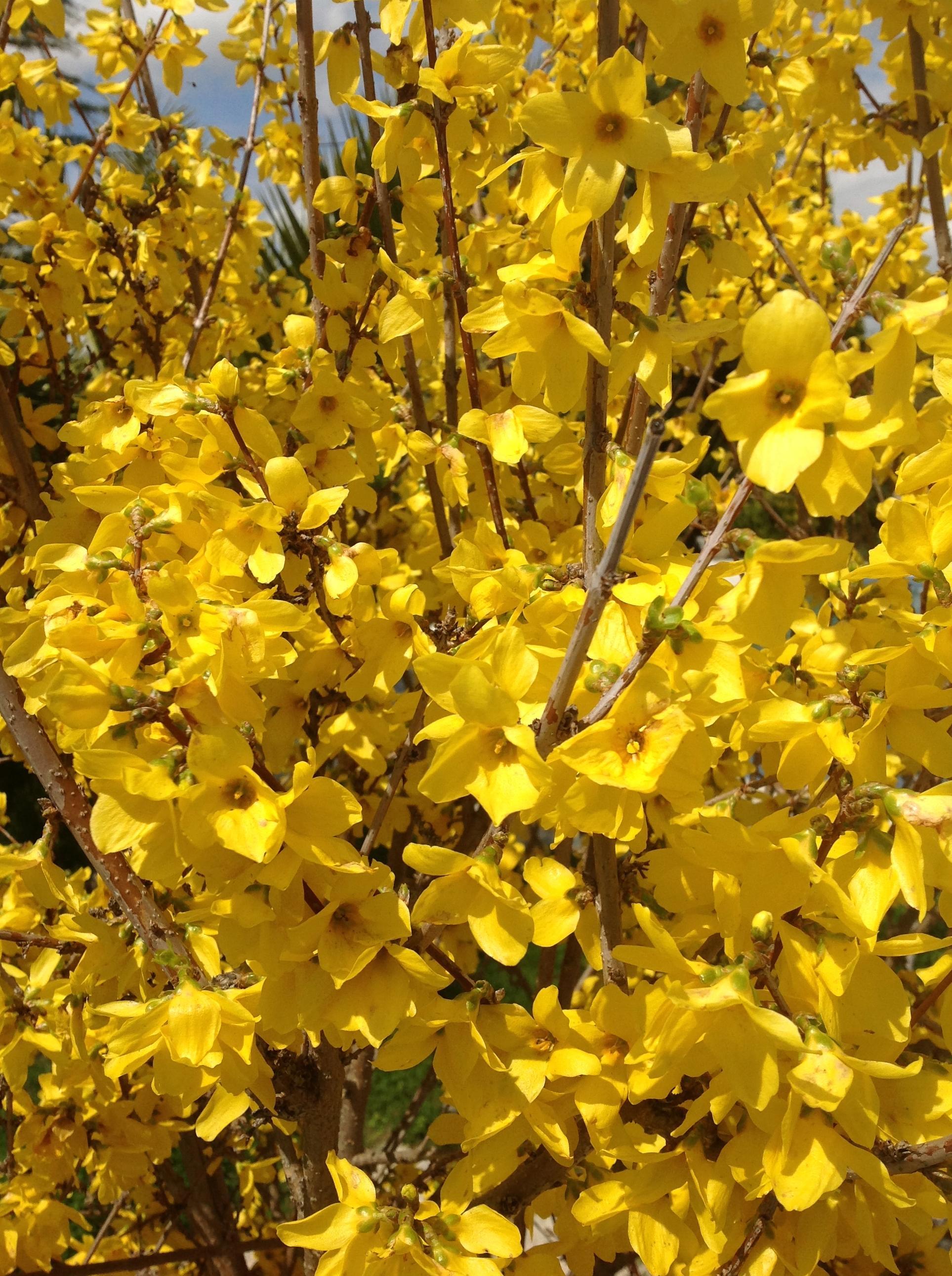Foto 42 de Floristerías en  | Flores Maranta