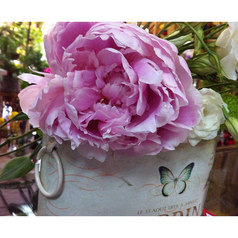 Foto 20 de Floristerías en  | Flores Maranta