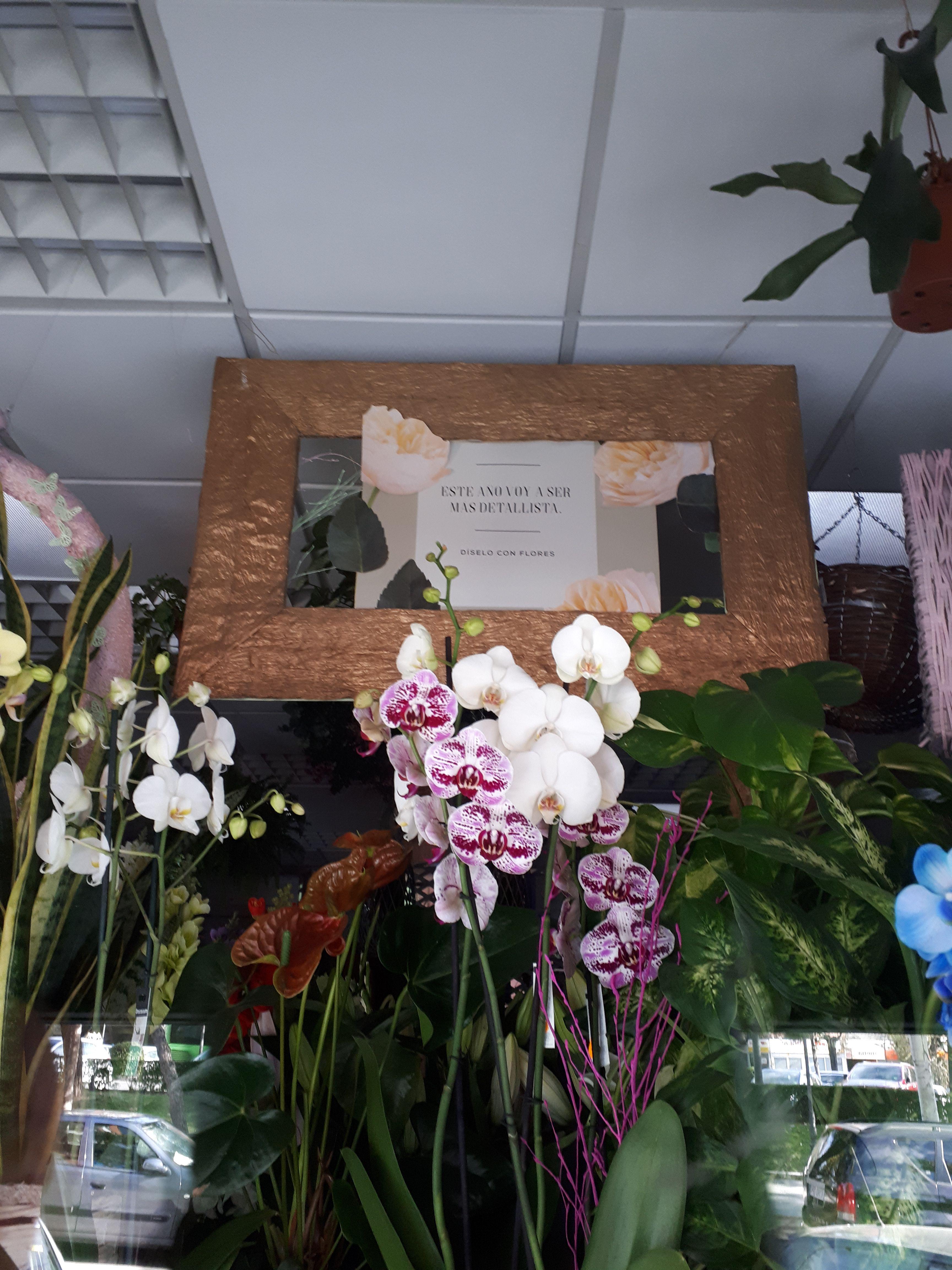 Foto 1 de Floristerías en  | Flores Maranta