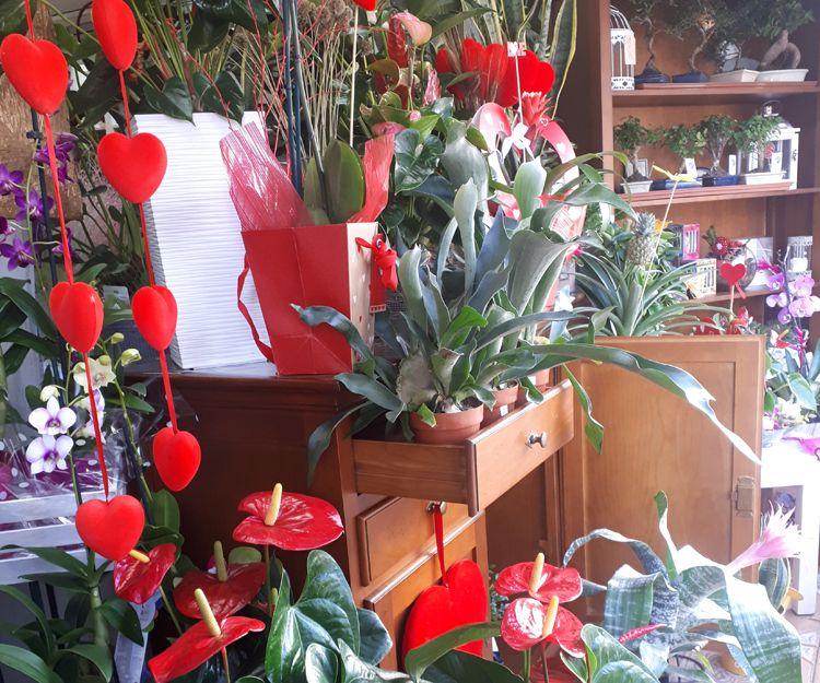 Foto 24 de Floristerías en  | Flores Maranta