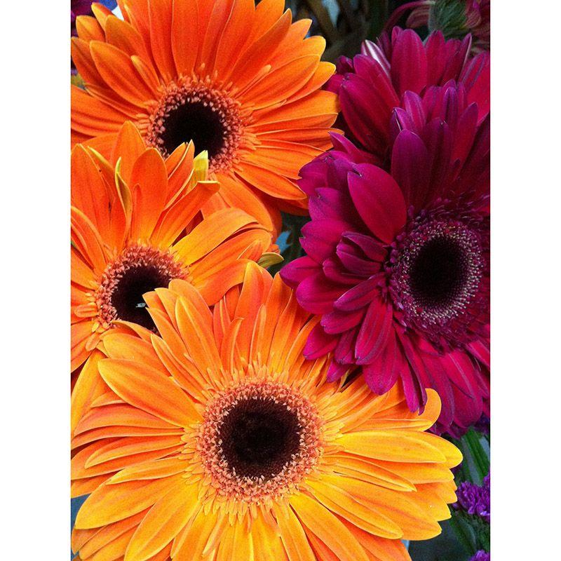 Foto 3 de Floristerías en  | Flores Maranta