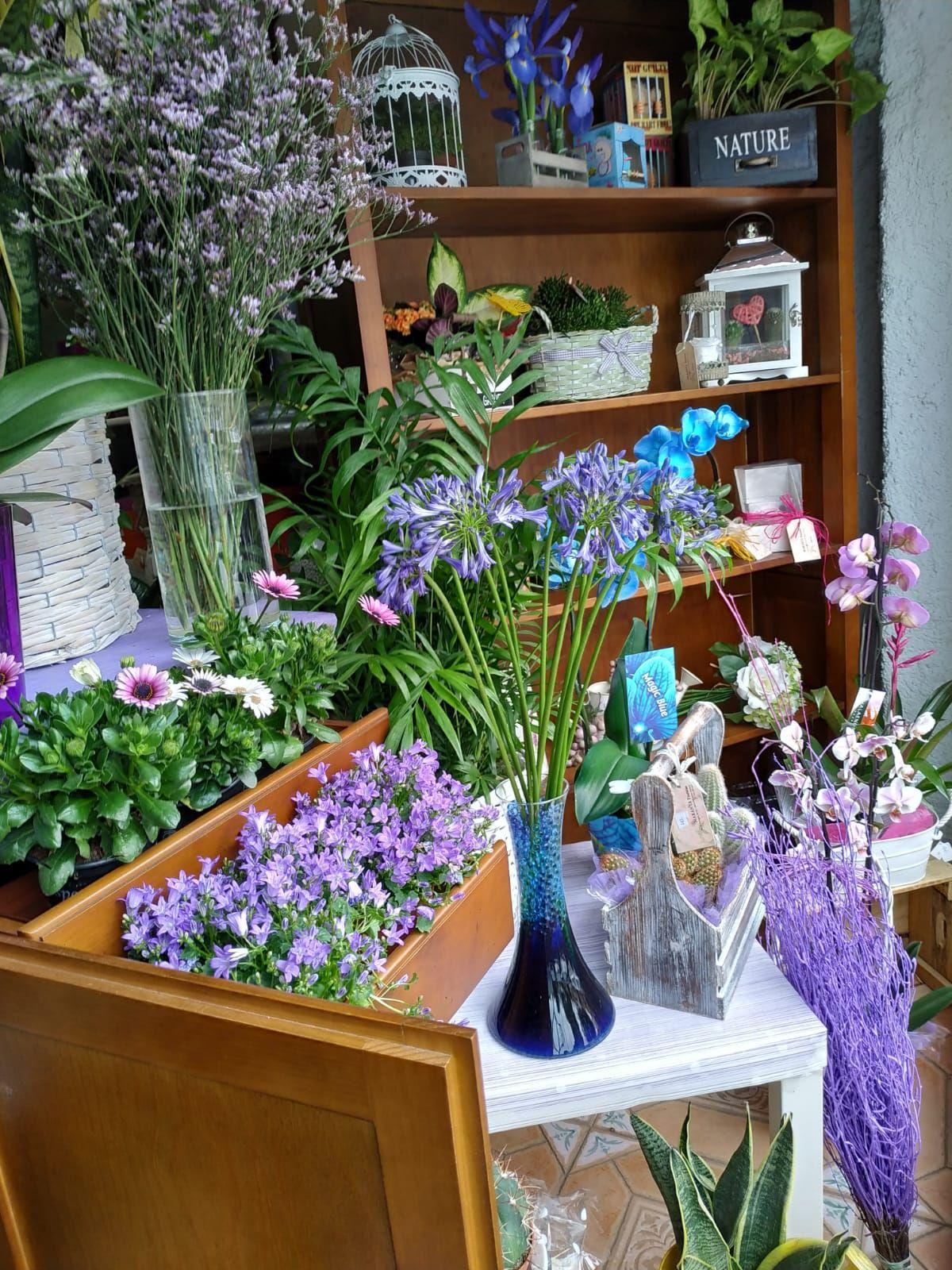 Foto 9 de Floristerías en  | Flores Maranta
