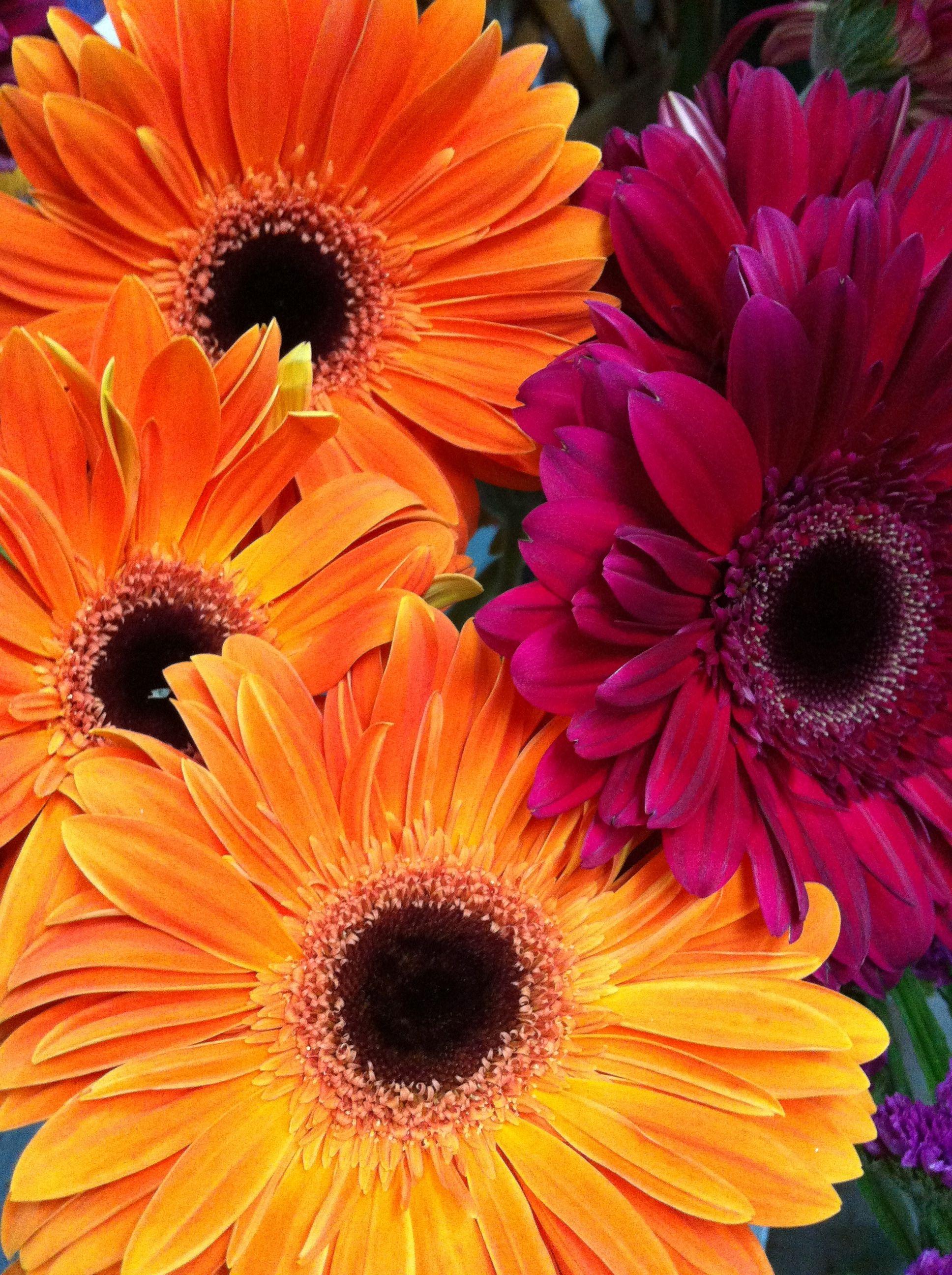 Foto 36 de Floristerías en  | Flores Maranta