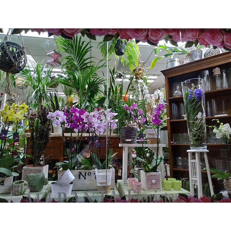 Foto 84 de Floristerías en  | Flores Maranta