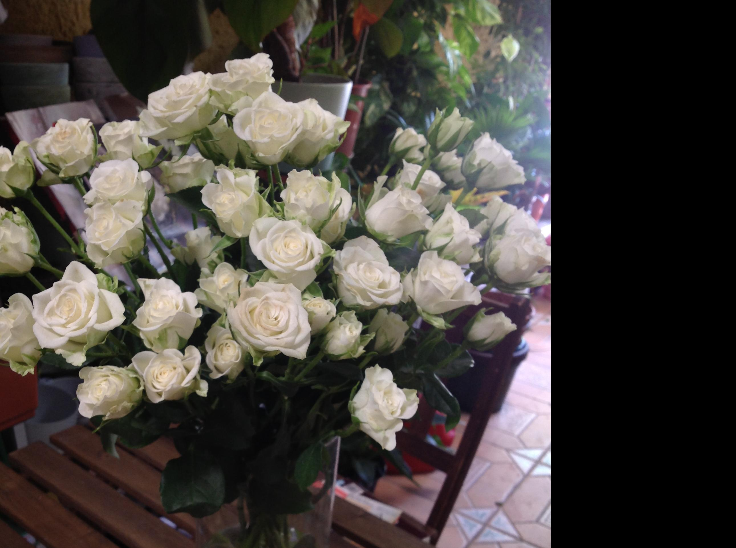 Rosas\u002Dfloresmaranta