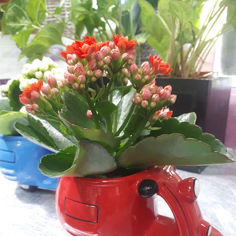 Foto 87 de Floristerías en  | Flores Maranta