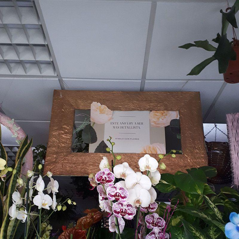 Foto 43 de Floristerías en  | Flores Maranta