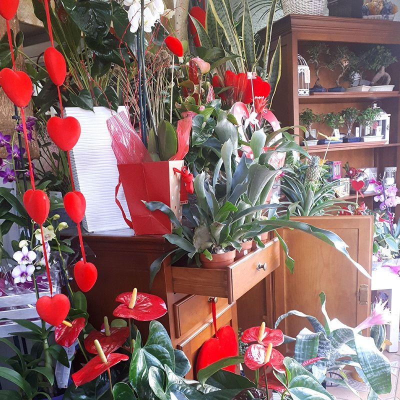 Foto 53 de Floristerías en  | Flores Maranta
