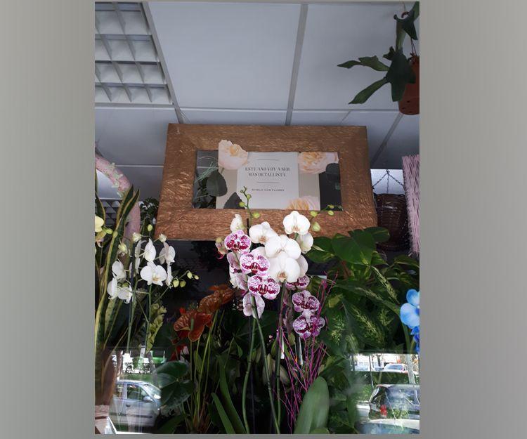 Foto 11 de Floristerías en  | Flores Maranta