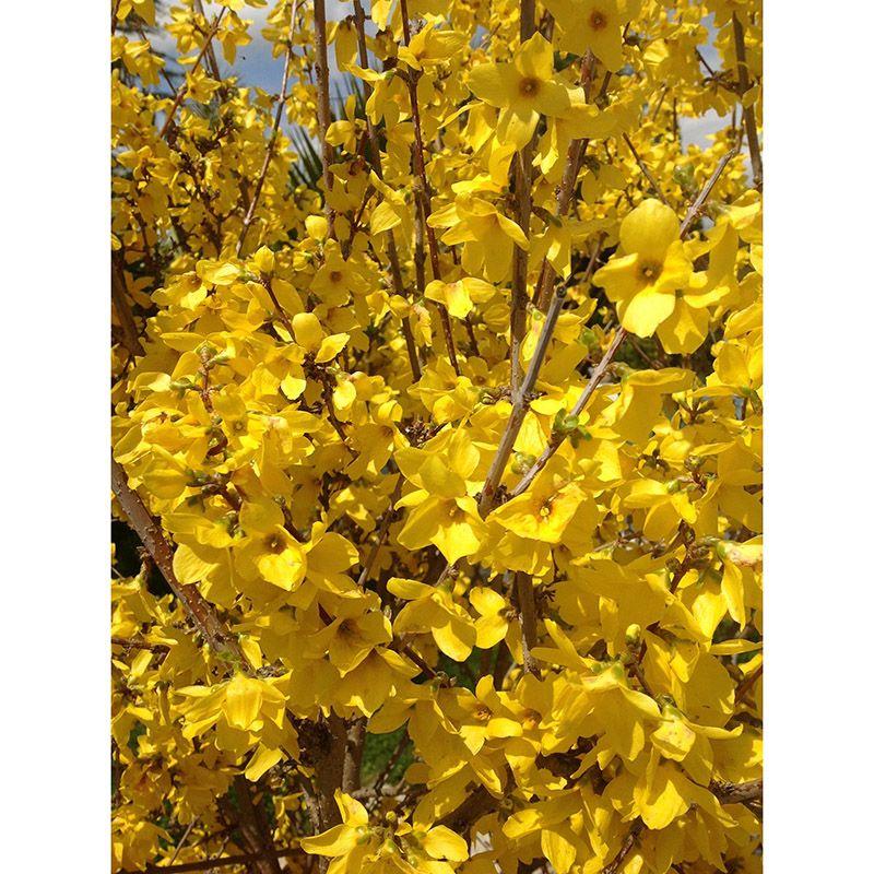 Foto 54 de Floristerías en  | Flores Maranta