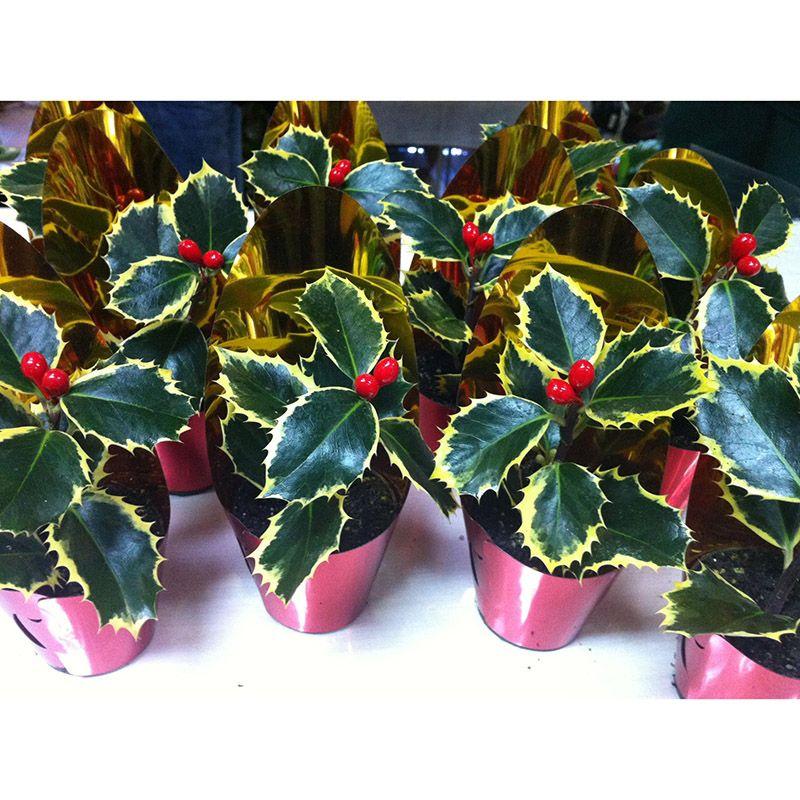 Foto 52 de Floristerías en  | Flores Maranta